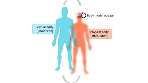 Grafik einer hellblauen Figur (links) und einer organgenen Figur, die über Rundpfeile oben und unten verbunden sind.