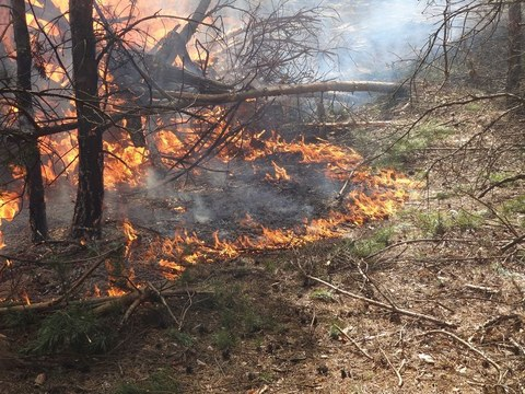Bodenfeuer im Wald, links sieht man verkohlte, dünne Bäume, rechts trockenen Waldboden. Dazwischen brennt ein Streifen Feuer