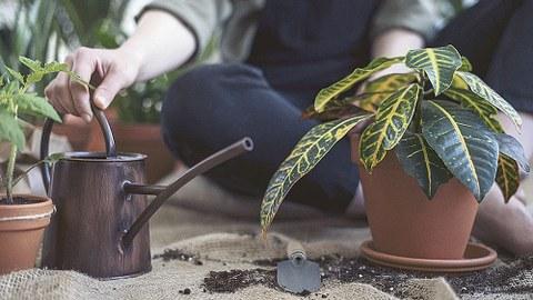 Rechts im Bild steht eine buntblättrige Pflanze in einem Topf, links daneben eine dunkle Gießkanne. Dahinter sitzt eine Person im Schneidersitz.
