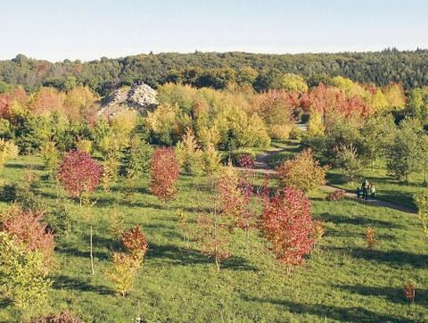 Blick auf die herbstlich bunt gefärbten Bäume im Nord-Amerika-Teil (hier die Appalachen) des Forstbotanischen Gartens in Tharandt.