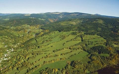 Grünes »Netzwerk« im tschechischen Riesengebirge.