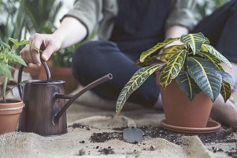 Eine Topfpflanze wird gegossen.