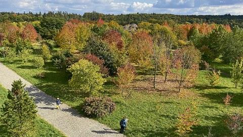 Das Nordamerika-Areal des Forstbotanischen Gartens in Tharandt von oben fotografiert.