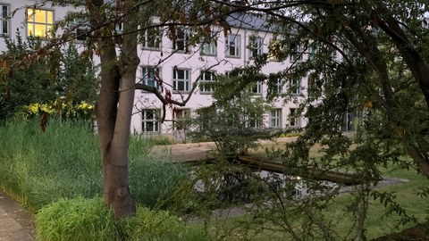 Teich mit Bäumen