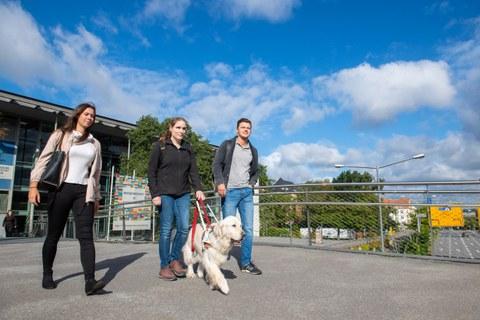 Foto dreier Studierender auf Fußgängerüberführung Bergstraße vor Hörsaalzentrum. Mittlere Studentin mit Blindenstock und Blindenhund.