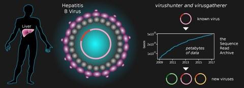 TUD, Uniklinik, neuartige Viren