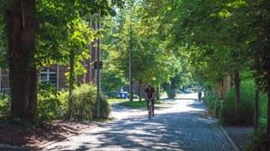 Foto einer gepflasterten Allee auf dem Campus, darauf fährt ein Radfahrer