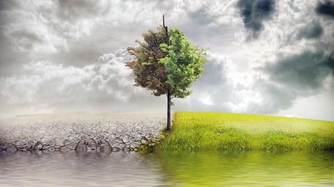 Foto: Ein Baum spiegelt sich im See. Links von ihm ist eine Wüste und rechts eine grüne Wiese.